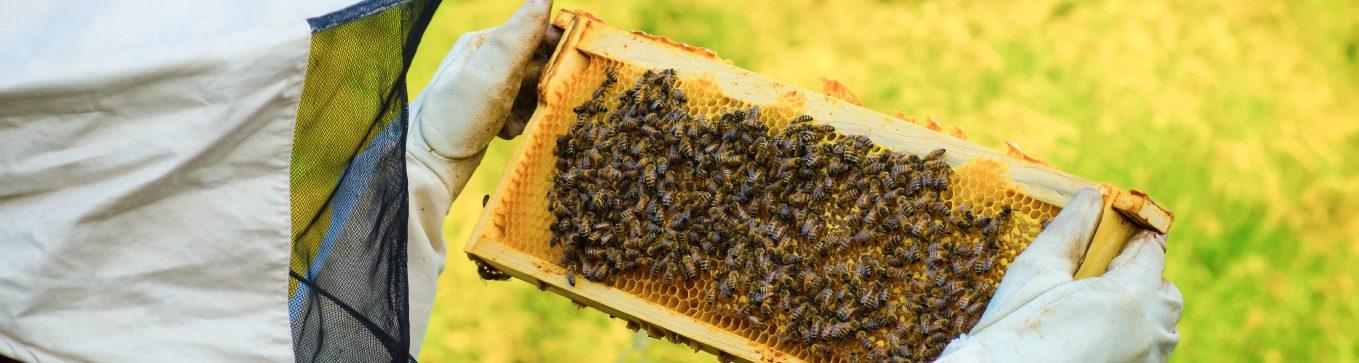 boda-méhészet-természetes-méz-organic-honey-mierenaturala
