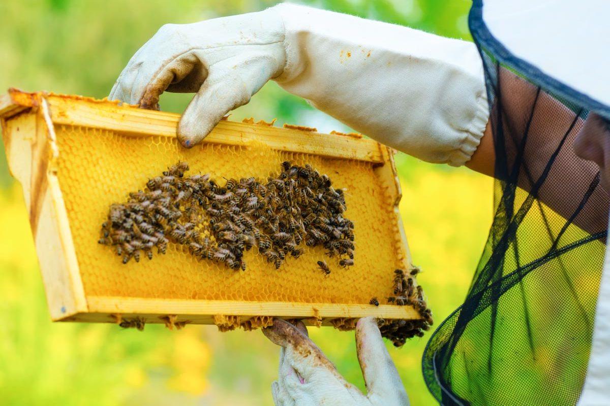Boda Méhészet - Miere Naturala Boda - Boda Honey - miere satu mare - 00