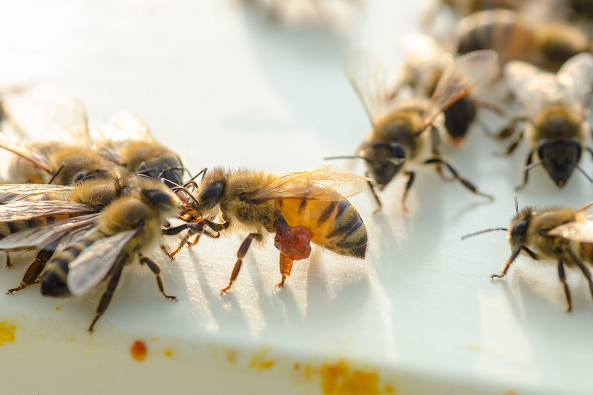Boda Méhészet - Miere Naturala Boda - Boda Honey - miere satu mare - 02