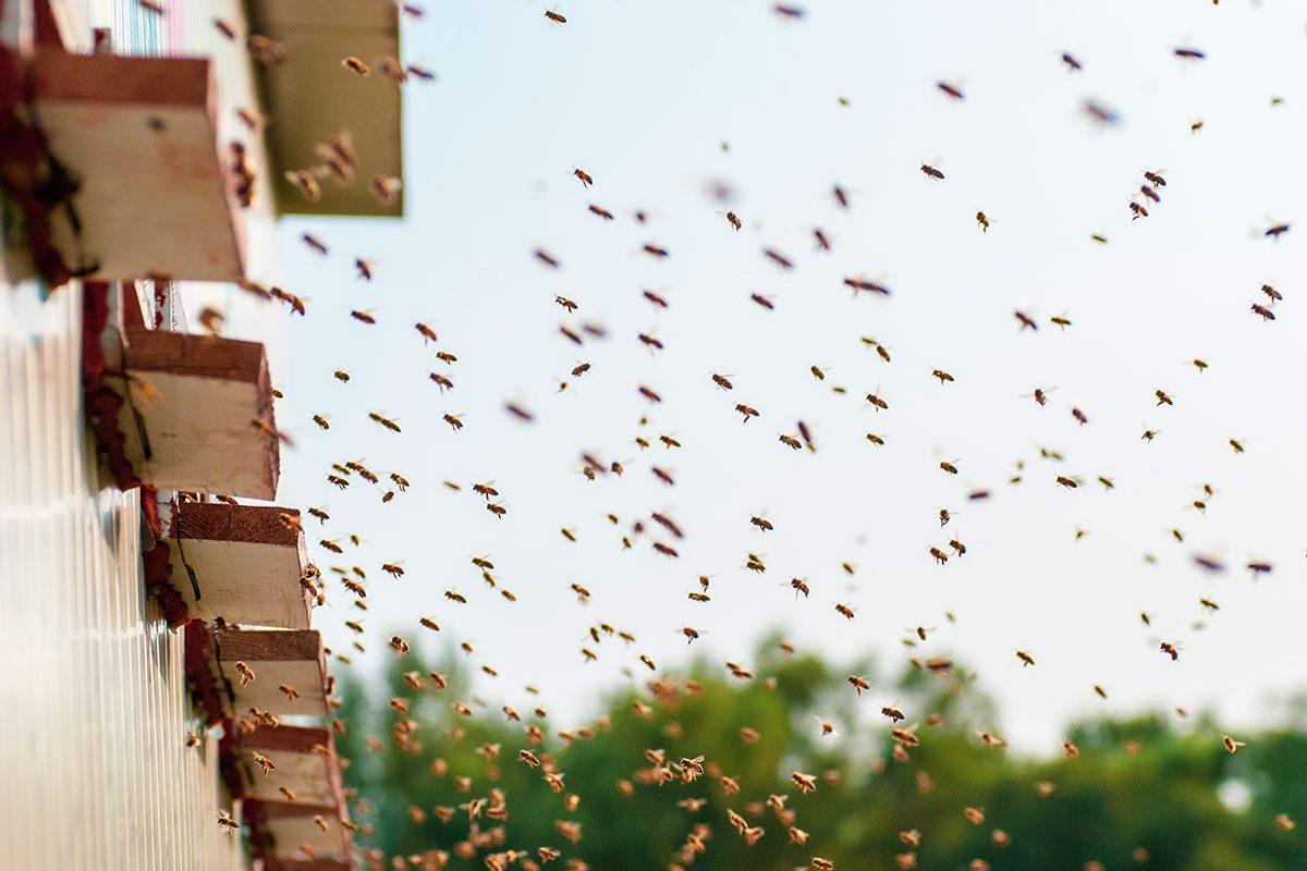 Boda Méhészet - Miere Naturala Boda - Boda Honey - miere satu mare - 03