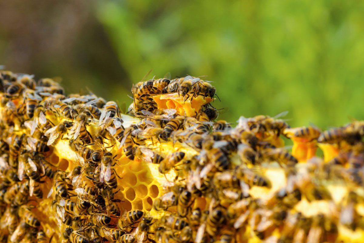 Boda Méhészet - Miere Naturala Boda - Boda Honey - miere satu mare - 07