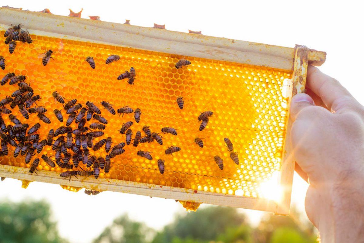 Boda Méhészet - Miere Naturala Boda - Boda Honey - miere satu mare