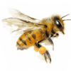 mierenaturalaboda-miere-naturala-bodaméhészet-honey-apicultura-méhészet-08