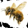 mierenaturalaboda-miere-naturala-bodaméhészet-honey-apicultura-méhészet-10